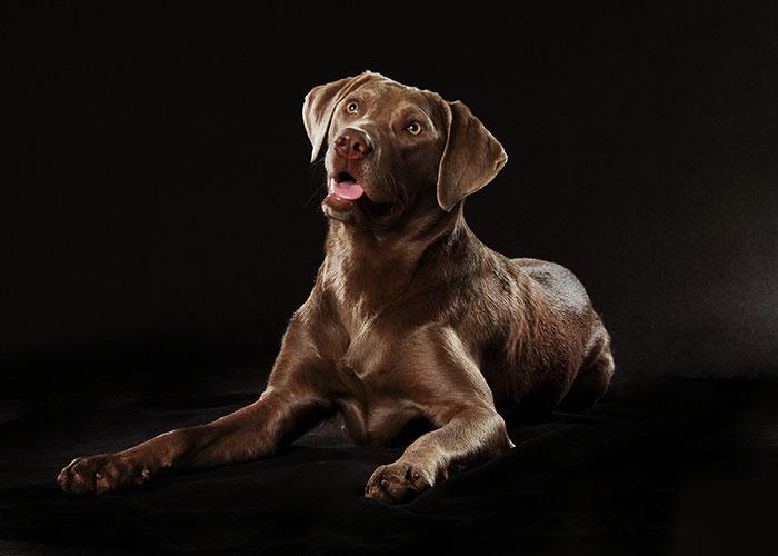 Fotostudio-Peter-Hundefotoshooting