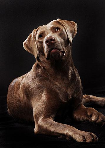 Fotostudio-Peter-Tierfotografie
